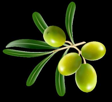 Cedar Gully Olives